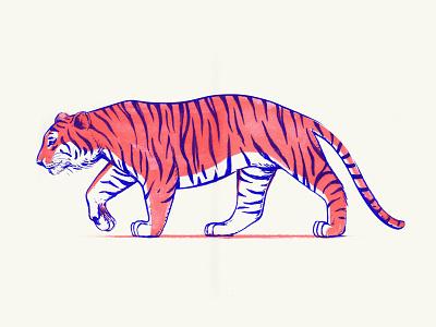 TIGERISO 2 colors hand drawn illustration drawing walk wildcat animal risograph riso tiger