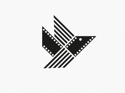Video Music video music bird black white line eye fly