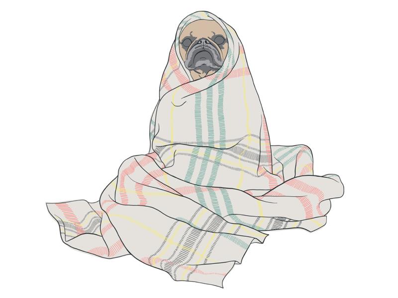 Pug in a blanket lol blanket pug