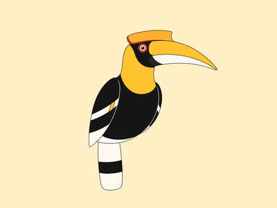Hornbills cute onlyoly color parrot bird pet icon animal