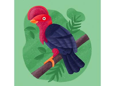 Rupicola Rupicola texture procreate guianan cock tropical red exotic bird illustration flat design