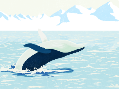 Whale drawing photoshop illustration