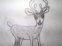 Deer Sketch for Character Illustration