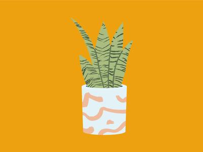 Snakeplant illustrator illustration vector