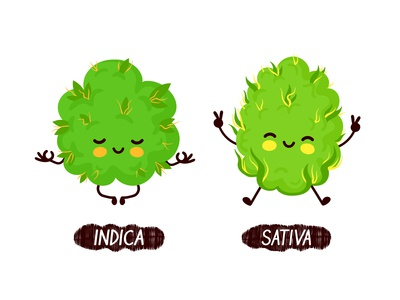 Indica vs sativa buddys