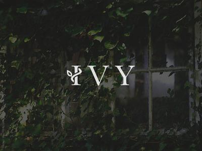 FEEDBACK: Ivy