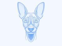 Arbitrary design_Dog