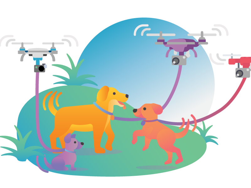 Dogs and drones gradient chihuahua golden retriever play park drone dog walker grass dog