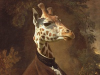 Giraffe Digital Painting