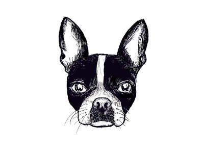 Meet PenPen the Boston Terrier. line art screen print terrier bulldog pug frenchie hand drawn puppy the american gentleman black and white line drawing illustration boston terrier dogs