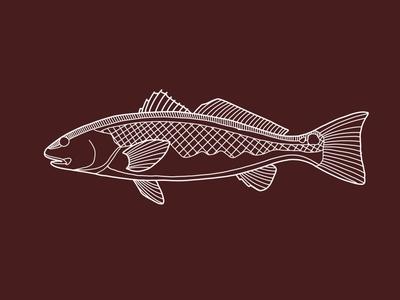 Redfish Study