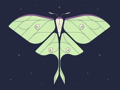 La Luna design wings illustrator vector illustration stars insect moon luna night moth
