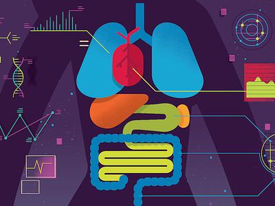 internal organs charts lungs heart science intestines organs