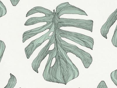 A Leaf of a Monstera Deliciosa