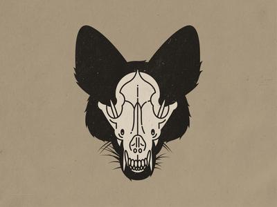Coyote Skull canine dog zoology skull coyote animal