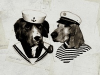 Sailor Dogs