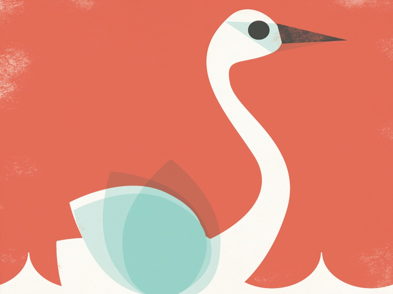 Swan Arctic Friends Calendar illustration swan
