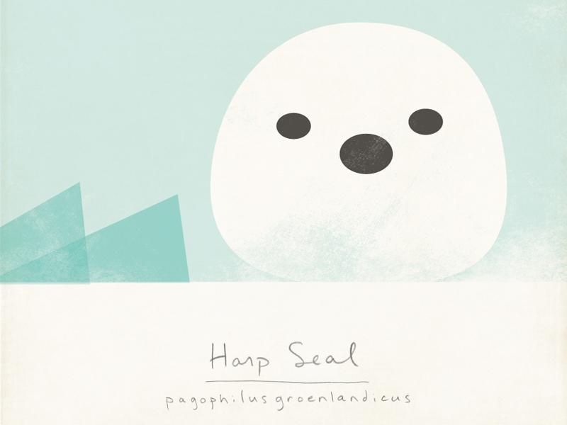 Harp Seal animals illustration nature arctic modern