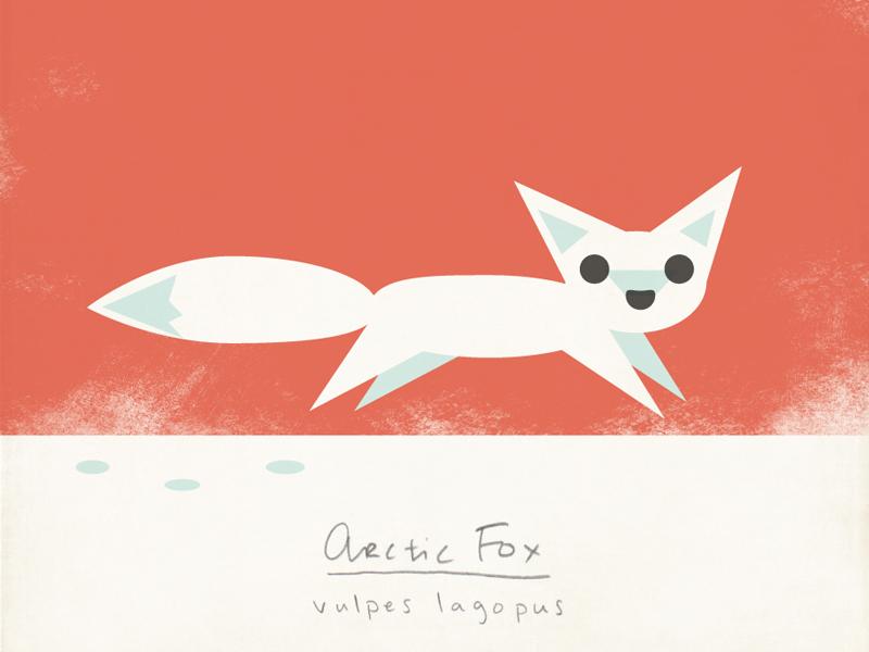 Arctic Fox animals illustration nature arctic modern fox