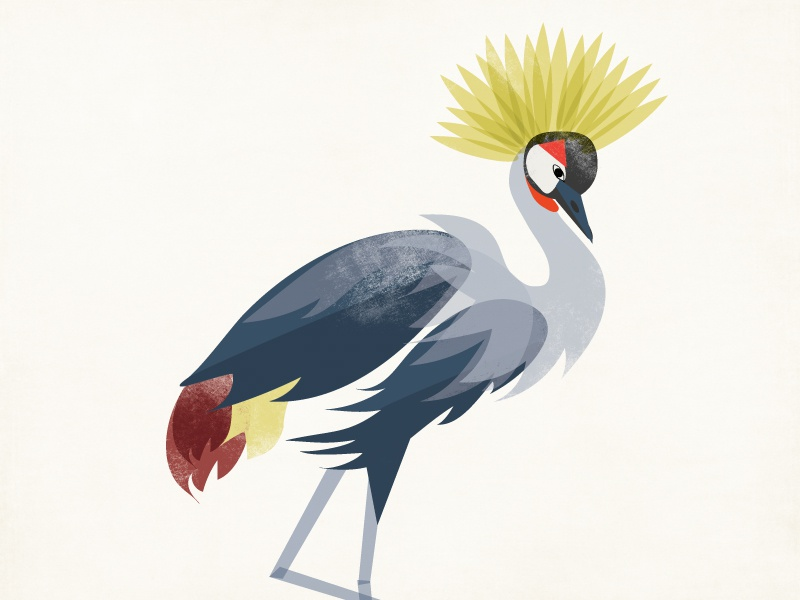 Grey Crowned Crane flat bird illustration crane