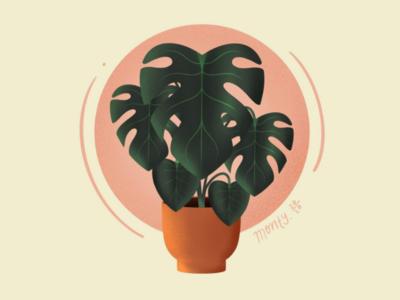 Holiday house plants ipadpro tropical lush procreate illustration house plant plant