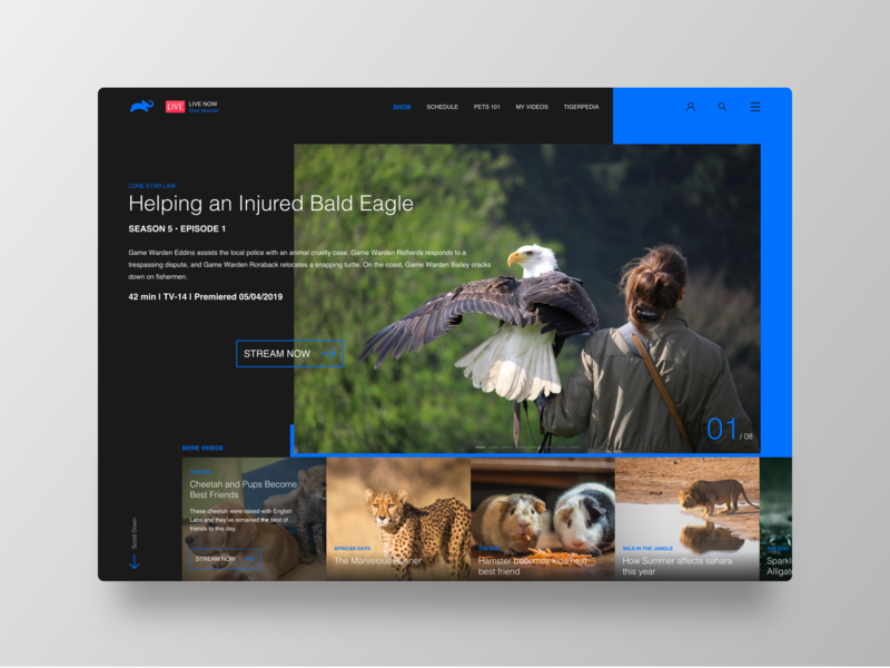 Animal Planet Website Revisited landing page typography ui redesign dribbble best shot visualdesign visuals design conception