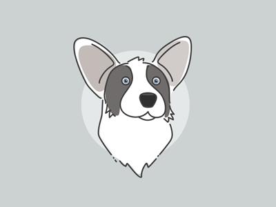 Indiana the Cardigan dog corgi