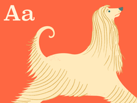 A is for Afghan Hound