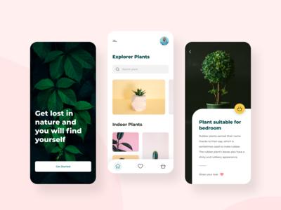 Buy Plant Online - Plant online store
