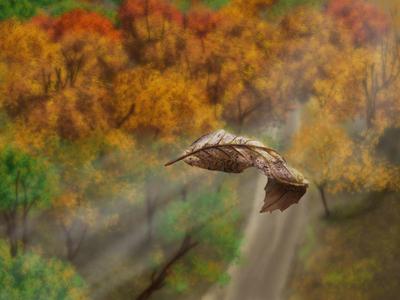 Fly leaf digital art digital painting leaf fall