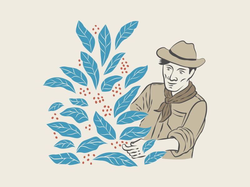 Coffee Handpick Harvesting farmer coffee illustration