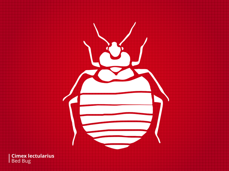 Bloodsuckers Bedbug stylized illustration bugs