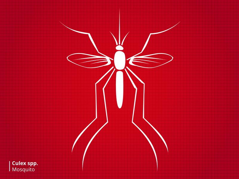 Bloodsuckers Mosquito stylized illustration bugs
