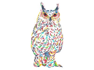 Owl illustration in color