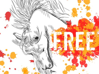 Wild, free horse
