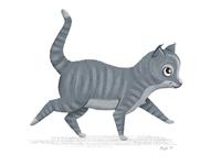 Gray Kitty Following 2 of 3