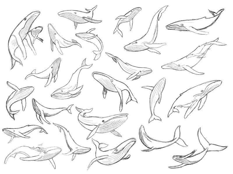 Humpback Whale - sketches process sketches whale animal custom logo design branding identity identity designer brandmark mark logo designer logo design logo