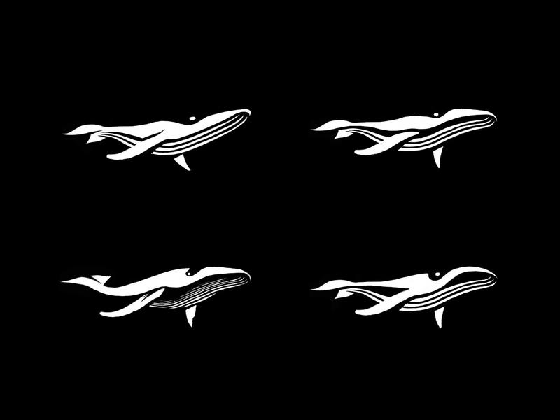 humpback whale - sketches 2 process sketches whale animal custom logo design symbol designer branding identity identity designer brandmark mark logo designer logo design logo
