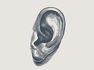 Engraving style ear illustration