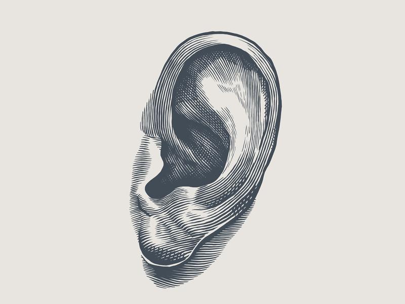 Engraving style ear illustration lines ear scratchboard etching engraving illustration wip