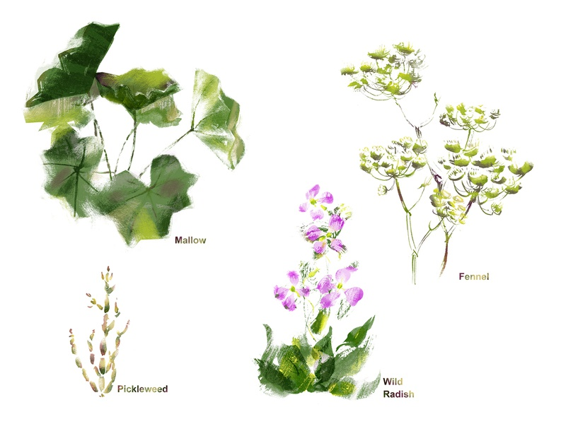 Four Plants flower wild spring yellow pink green spot illustration spot plants fennel radish mallow pickleweed