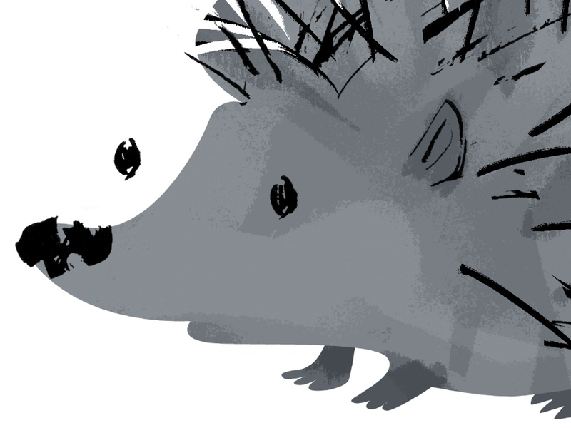 hedgehog - 1/3 done character design cute nose prickly gray animal illustration illustration art character hedgehog