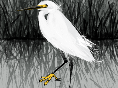 Snowy Egret feathers feather beak plumage reflection character gray yellow white protected species birds bird nature interpretive heron snowy egret snowy egret