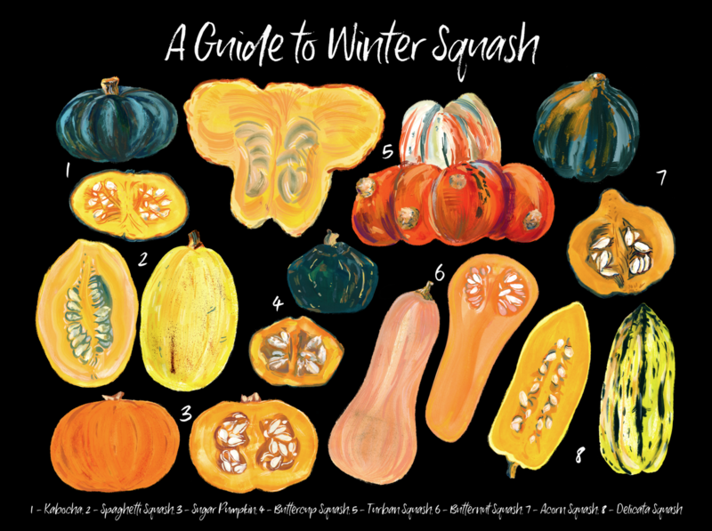A Guide to Winter Squash Poster seeds hand drawn gouache color orange food pumpkin poster winter squash