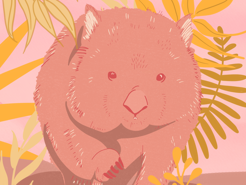 Wombat - Illustration