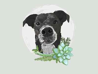 Pet Portait - Ollie succulents digital design illustration digital dog illustration portrait dog pet