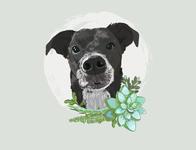 Pet Portait - Ollie