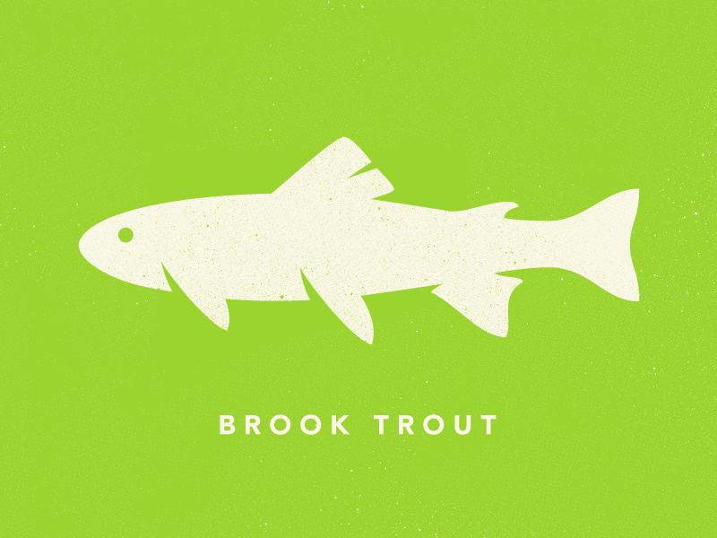 Brook Trout brook trout illustration vector james mcdonough design fish animal