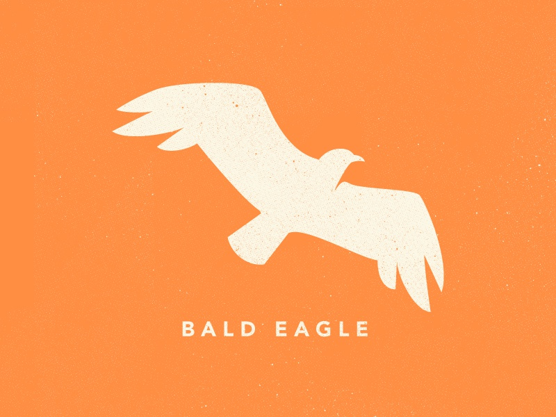 Eagle Icon texture james mcdonough design illustration bald eagle eagle bird vector icon