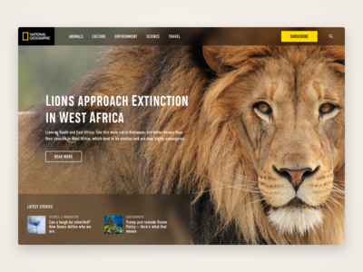 Animal based web UI featuring a lion national geographic web ui animal ui lions lion web animal animals